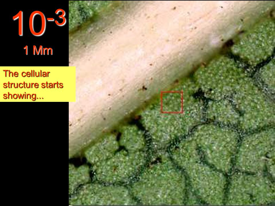 At this distance it is possible to observe the structure of the leaf. 10 -2 1 Cm