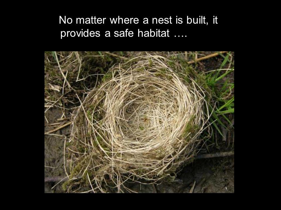 No matter where a nest is built, it provides a safe habitat ….