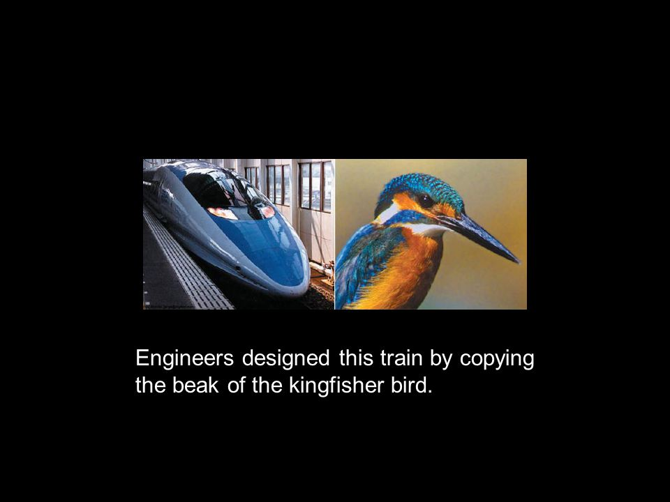 Engineers designed this train by copying the beak of the kingfisher bird.