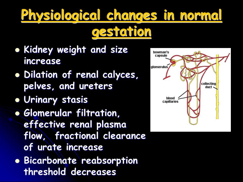 Preeclampsia A decrease in the GFR occurs secondary to intrarenal vasospasm.