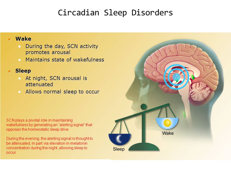 Circadian Sleep Disorders Wake Wake During the day, SCN activity promotes arousalDuring the day, SCN activity promotes arousal Maintains state of wake