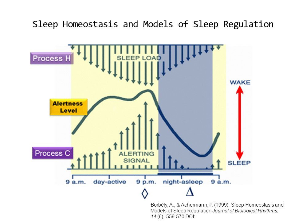 Borbély, A., & Achermann, P. (1999). Sleep Homeostasis and Models of Sleep Regulation Journal of Biological Rhythms, 14 (6), 559-570 DOI: Sleep Homeos