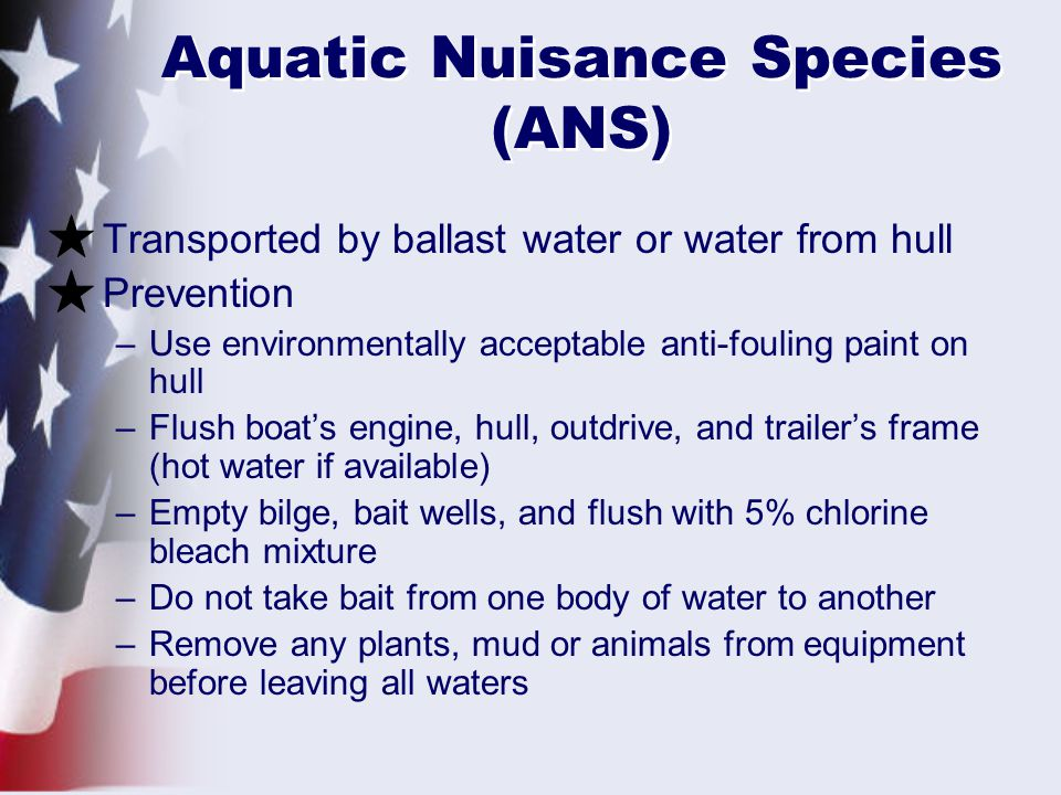 Aquatic Nuisance Species (ANS) Transported by ballast water or water from hull Prevention –Use environmentally acceptable anti-fouling paint on hull –Flush boat's engine, hull, outdrive, and trailer's frame (hot water if available) –Empty bilge, bait wells, and flush with 5% chlorine bleach mixture –Do not take bait from one body of water to another –Remove any plants, mud or animals from equipment before leaving all waters