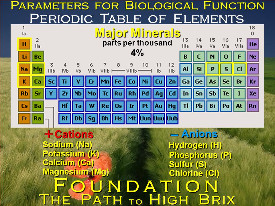 Periodic Table of Elements Parameters for Biological Function Major Minerals parts per thousand Cations Anions Sodium (Na) Potassium (K) Calcium (Ca) Magnesium (Mg) Phosphorus (P) Sulfur (S) Chlorine (Cl) The Path to High Brix Foundation 4% Hydrogen (H)