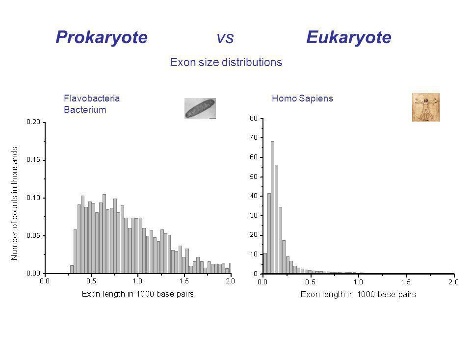 Prokaryote vs Eukaryote Exon size distributions Homo SapiensFlavobacteria Bacterium