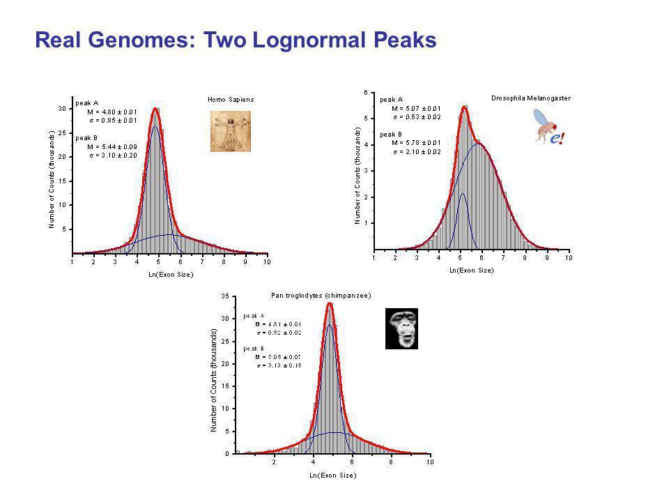 Real Genomes: Two Lognormal Peaks
