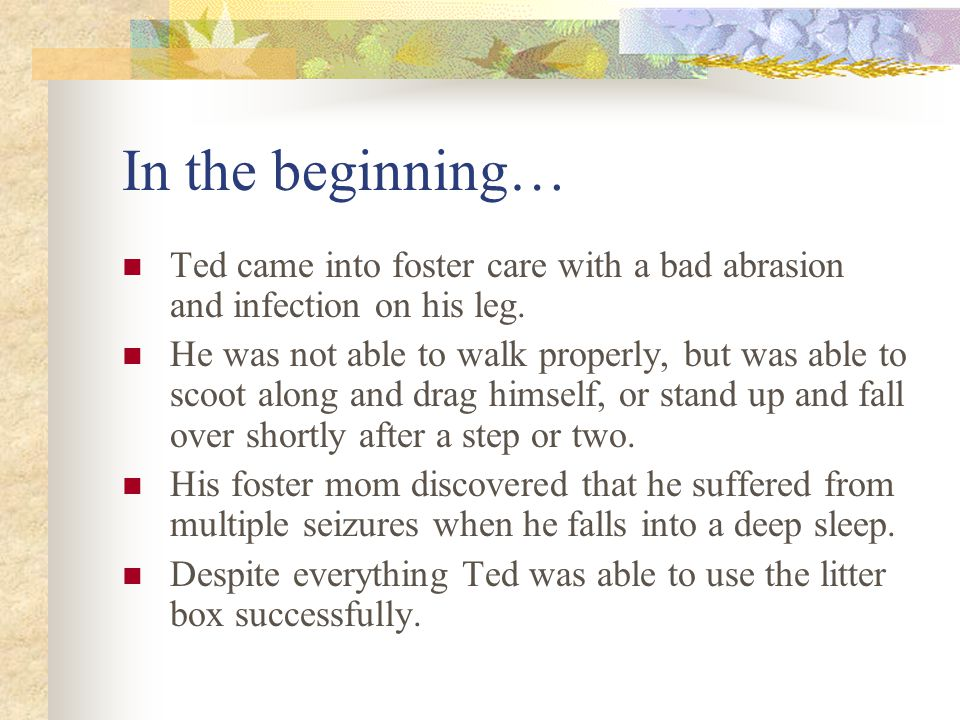 About Teddy, the Handicat… Ted is neurologically damaged.