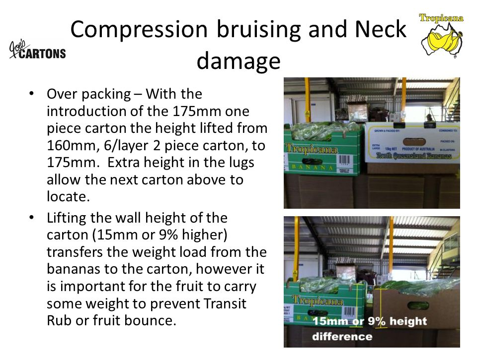 Compression bruising and Neck damage Over packing – With the introduction of the 175mm one piece carton the height lifted from 160mm, 6/layer 2 piece carton, to 175mm.