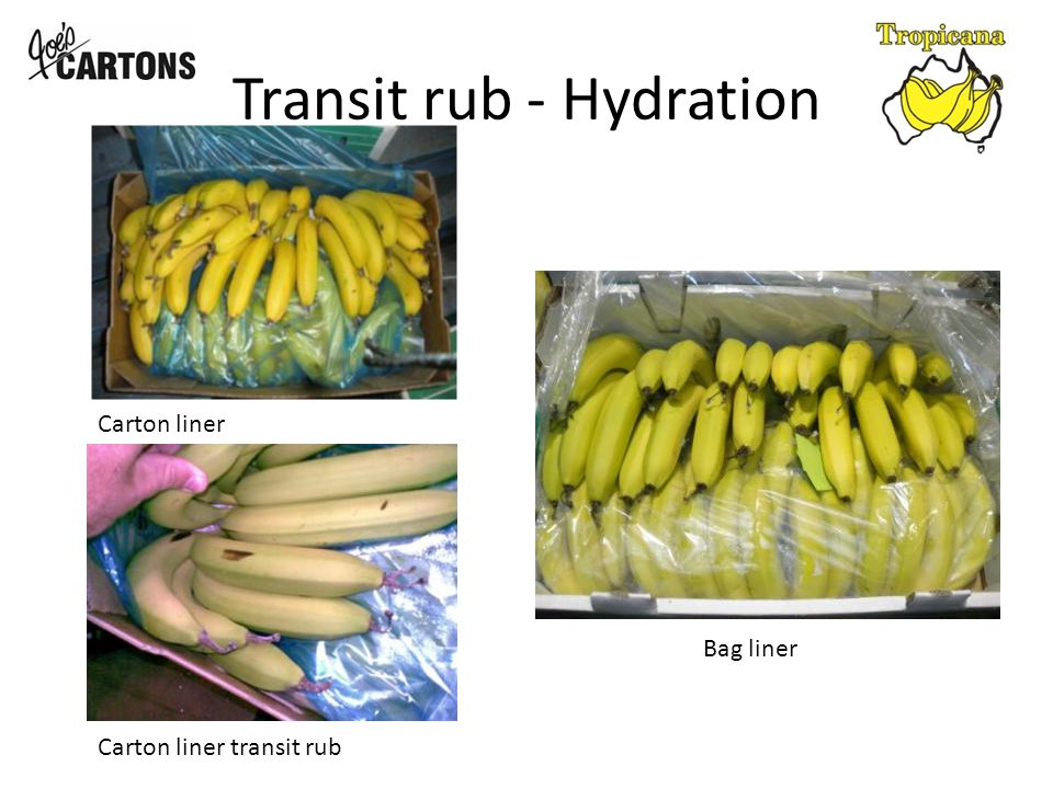 Transit Rub – Loosely packed Loosely packed carton can allow the approximately 15 clusters of fruit to move independently of each other, causing friction rub between the fingers of bananas.