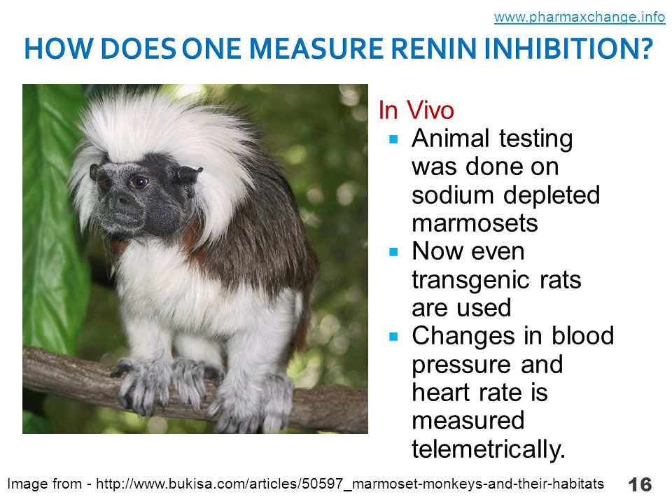  In Vitro  Human renin is incubated with inhibitor  Angiotensinogen is added.
