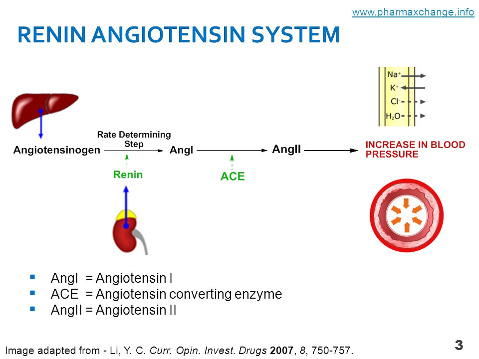 3  AngI = Angiotensin I  ACE = Angiotensin converting enzyme  AngII = Angiotensin II Image adapted from - Li, Y. C. Curr. Opin. Invest. Drugs 2007,