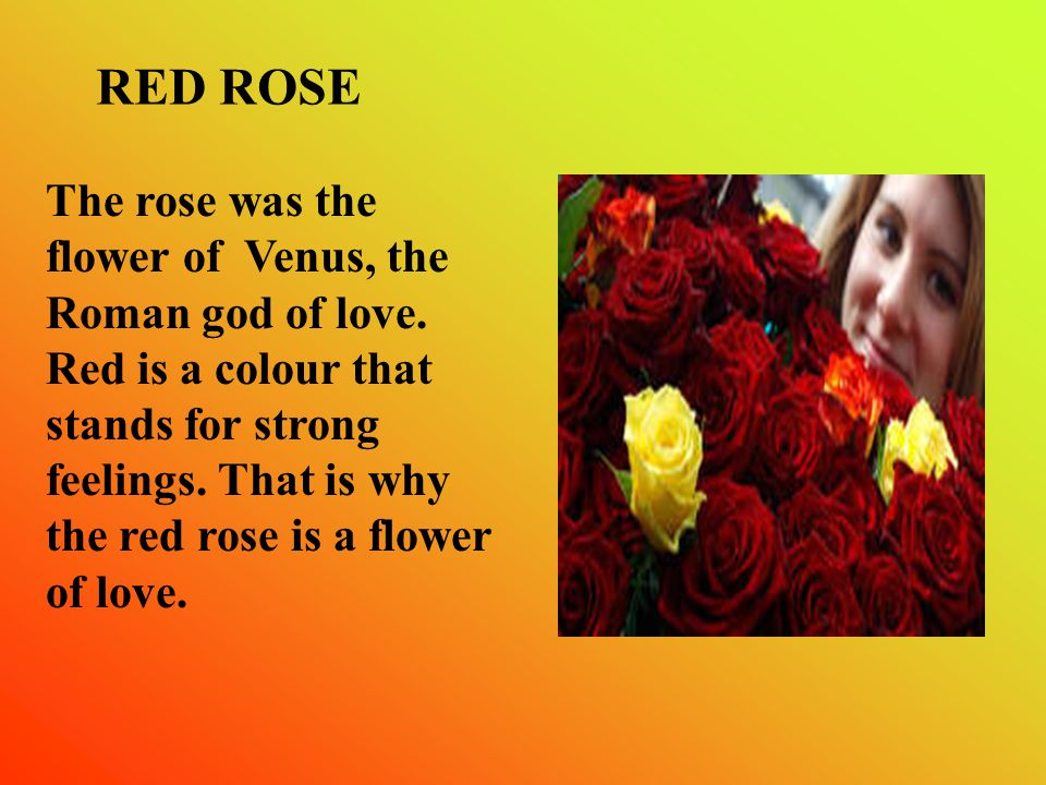 The rose was the flower of Venus, the Roman god of love.