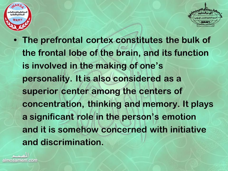 The prefrontal cortex constitutes the bulk of the frontal lobe of the brain, and its function is involved in the making of one's personality.