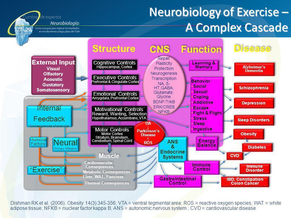 Neurobiology of Exercise – A Complex Cascade Dishman RK et al. (2006), Obesity 14(3):345-356; VTA = ventral tegmental area; ROS = reactive oxygen spec