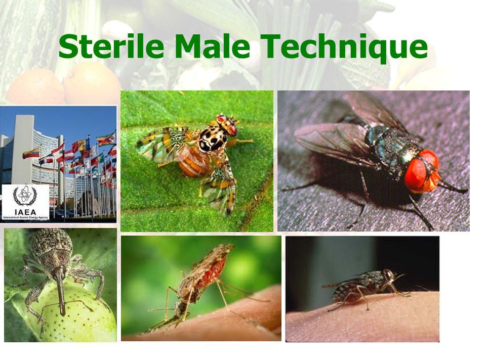 Sterile Male Technique