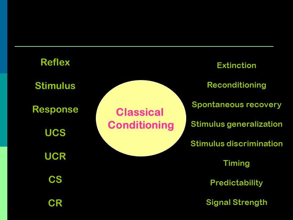 Classical Conditioning Extinction Reconditioning Spontaneous recovery Stimulus generalization Stimulus discrimination Timing Predictability Signal Str