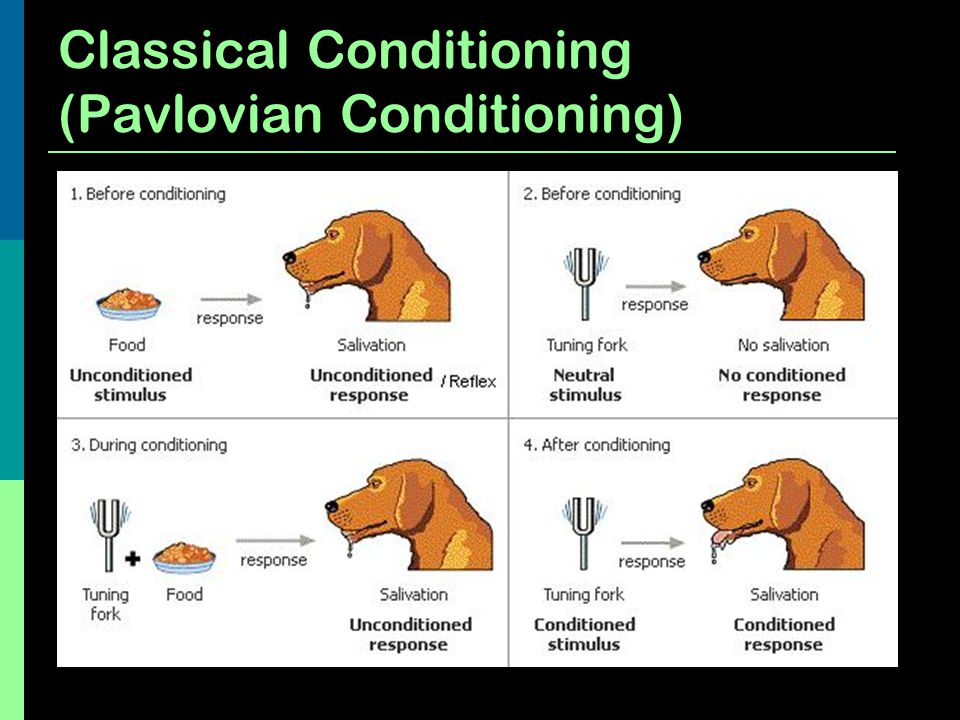 Classical Conditioning (Pavlovian Conditioning)