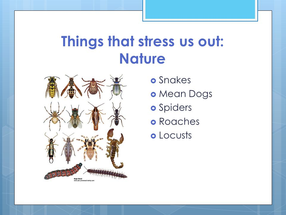 Things that stress us out: Nature  Snakes  Mean Dogs  Spiders  Roaches  Locusts