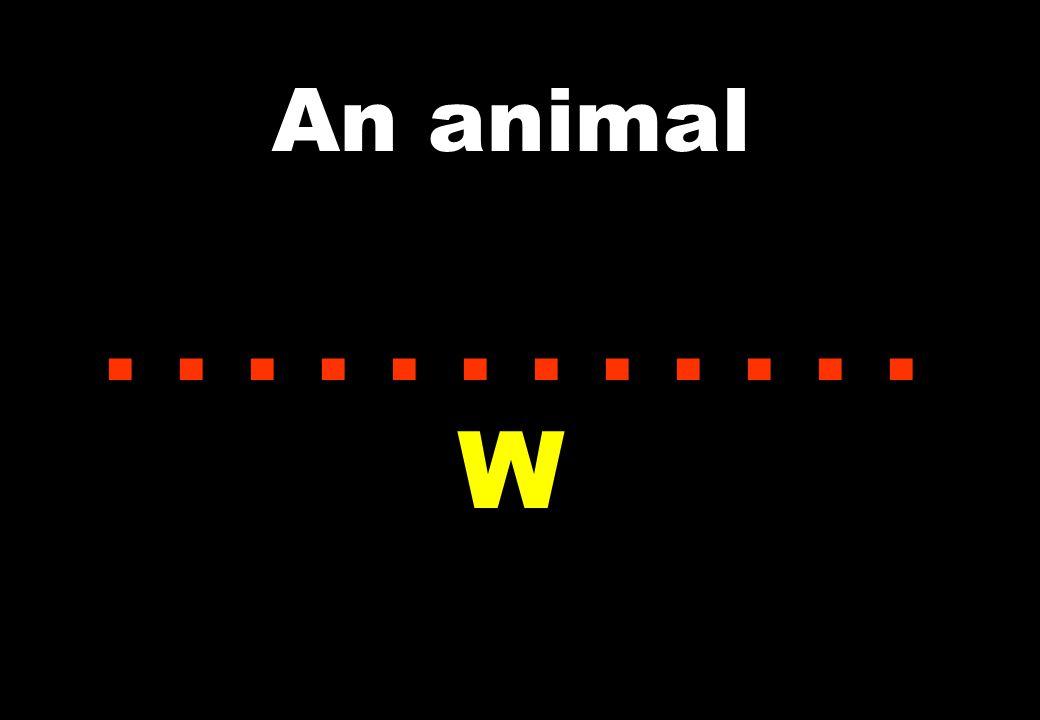 An animal...... W