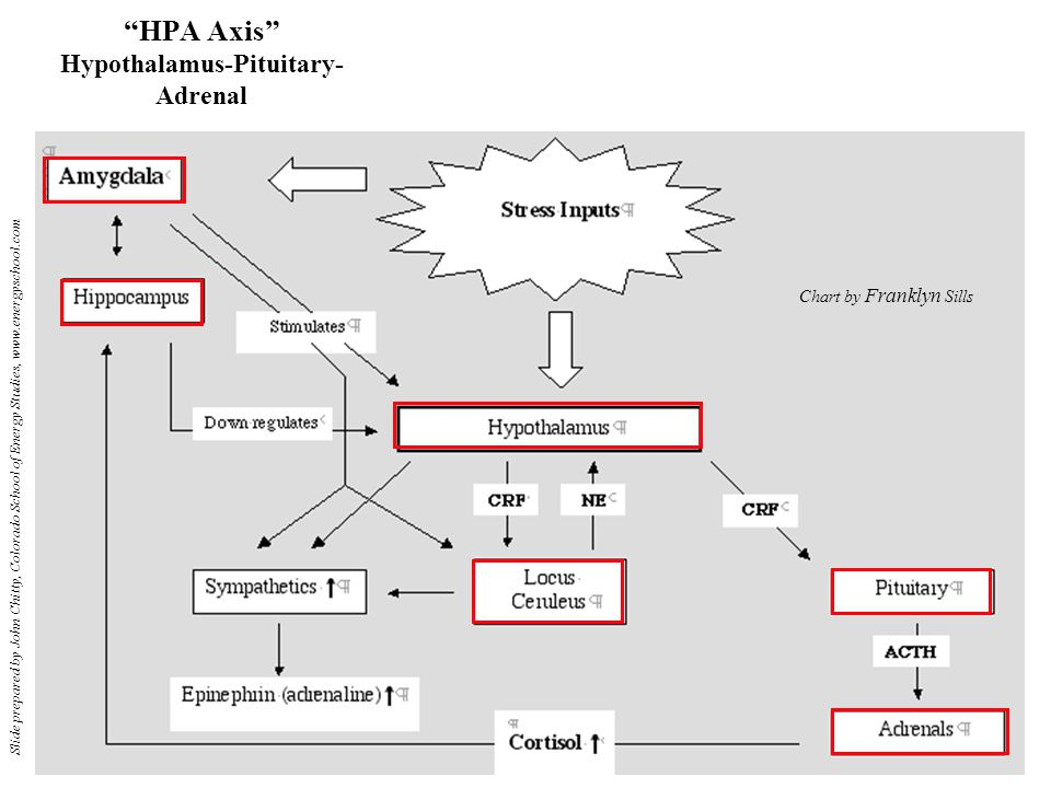 HPA Axis Hypothalamus-Pituitary- Adrenal Chart by Franklyn Sills Slide prepared by John Chitty, Colorado School of Energy Studies, www.energyschool.com