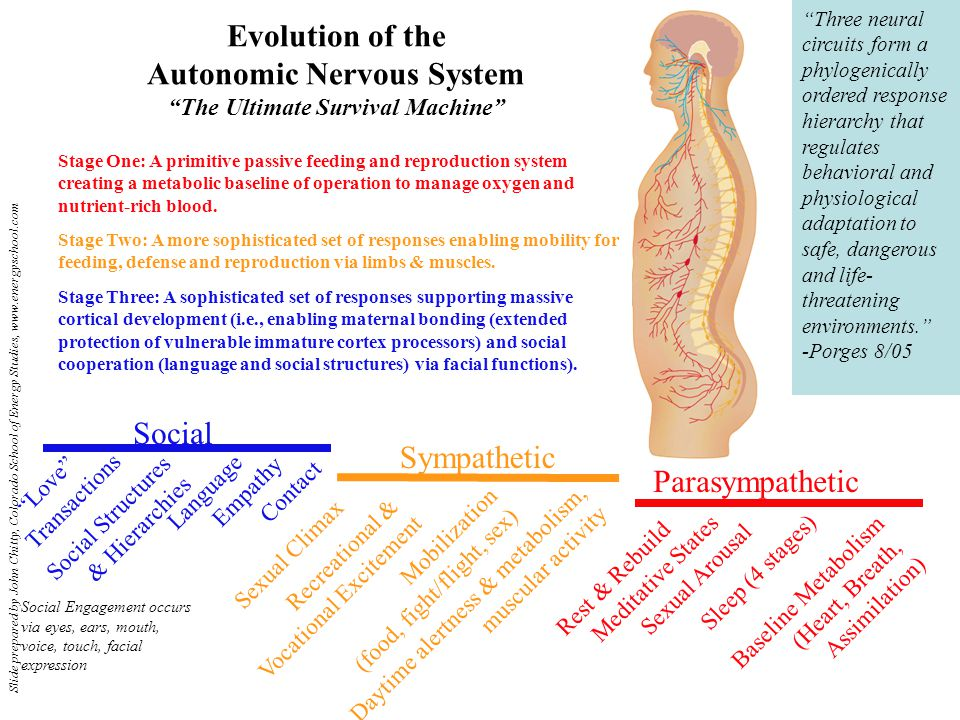 Evolution of the Autonomic Nervous System The Ultimate Survival Machine Stage One: A primitive passive feeding and reproduction system creating a metabolic baseline of operation to manage oxygen and nutrient-rich blood.