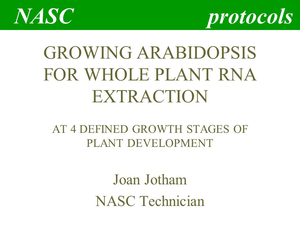 NASC protocols GROWING ARABIDOPSIS FOR WHOLE PLANT RNA EXTRACTION AT 4 DEFINED GROWTH STAGES OF PLANT DEVELOPMENT Joan Jotham NASC Technician