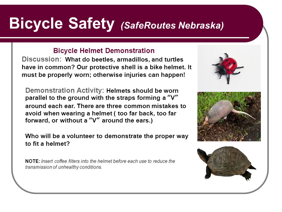 Bicycle Safety (SafeRoutes Nebraska) Bicycle Helmet Demonstration Discussion: What do beetles, armadillos, and turtles have in common? Our protective