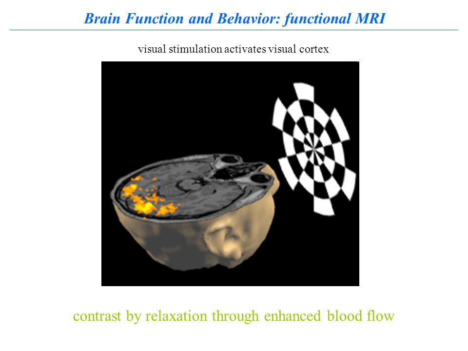 Brain Function and Behavior: functional MRI contrast by relaxation through enhanced blood flow visual stimulation activates visual cortex