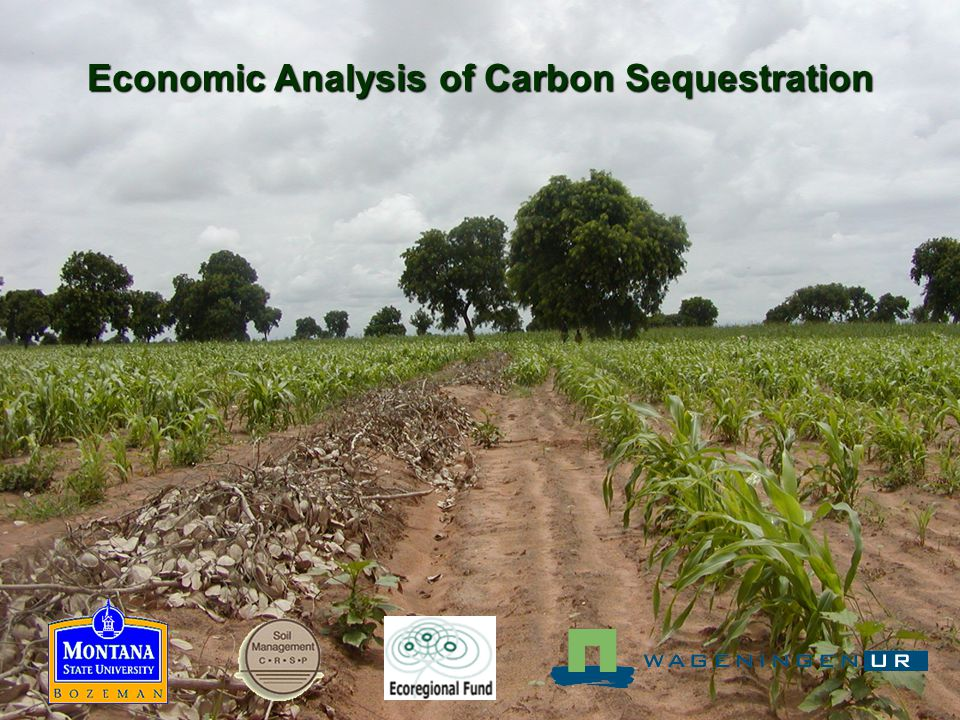 Economic Analysis of Carbon Sequestration