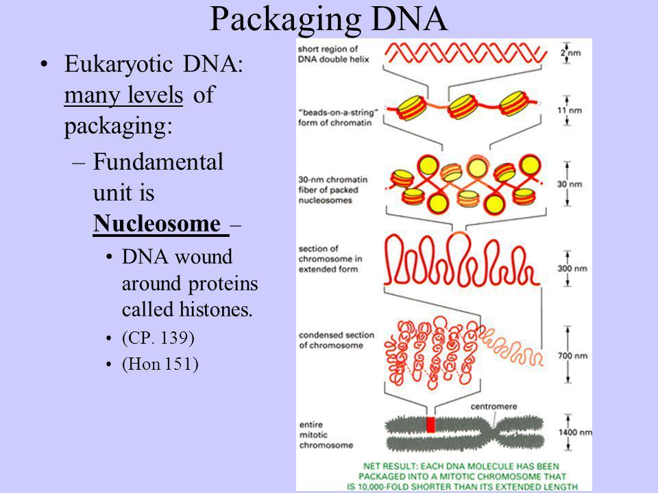 DNA Animation http://www.johnkyrk.com/DNAanatomy.html http://207.207.4.198/pub/flash/24/menu.swf