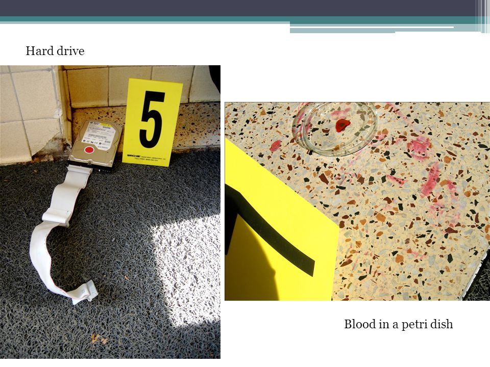 Hard drive Blood in a petri dish