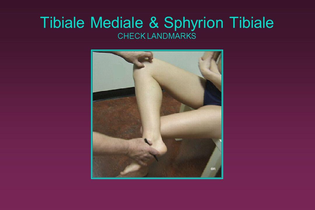 Tibiale Mediale & Sphyrion Tibiale CHECK LANDMARKS ©R