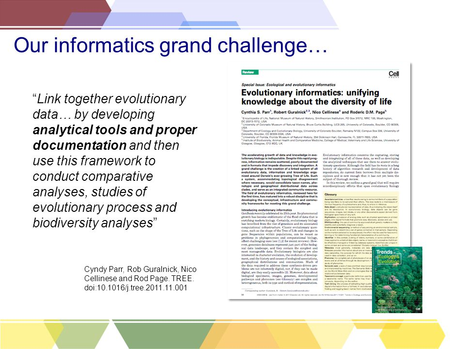 Our informatics grand challenge… Link together evolutionary data… by developing analytical tools and proper documentation and then use this framework to conduct comparative analyses, studies of evolutionary process and biodiversity analyses Cyndy Parr, Rob Guralnick, Nico Cellinese and Rod Page.