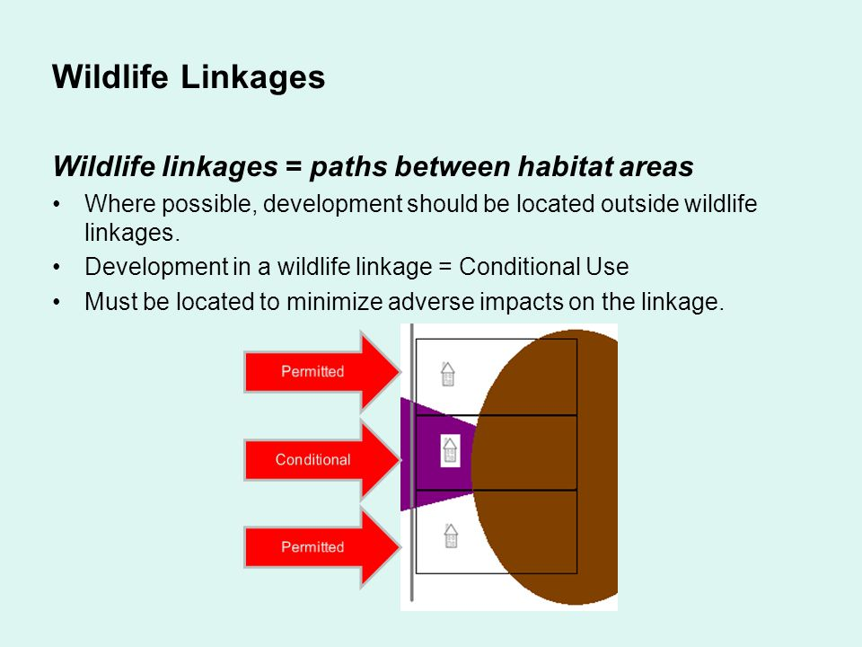 Wildlife Linkages Wildlife linkages = paths between habitat areas Where possible, development should be located outside wildlife linkages. Development