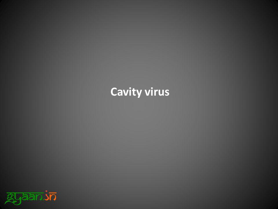 Cavity virus
