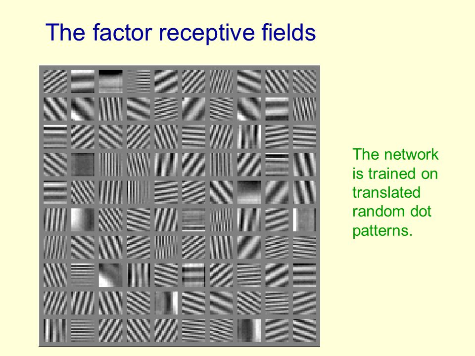 The factor receptive fields The network is trained on translated random dot patterns.