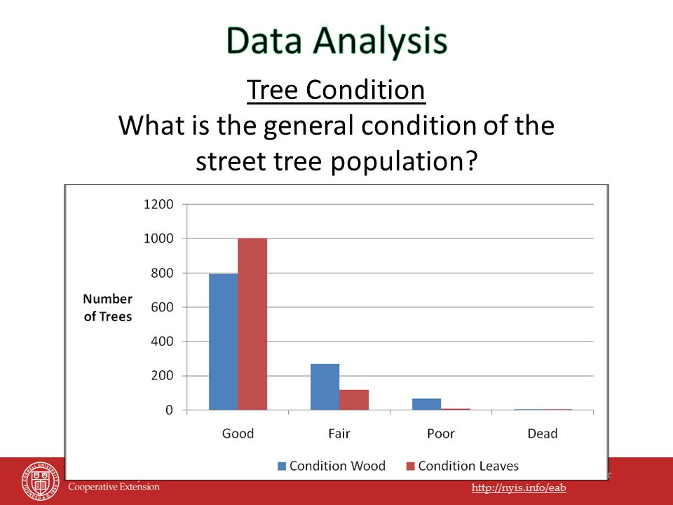 Preparing for the Emerald Ash Borer http://nyis.info/eab Tree Condition What is the general condition of the street tree population