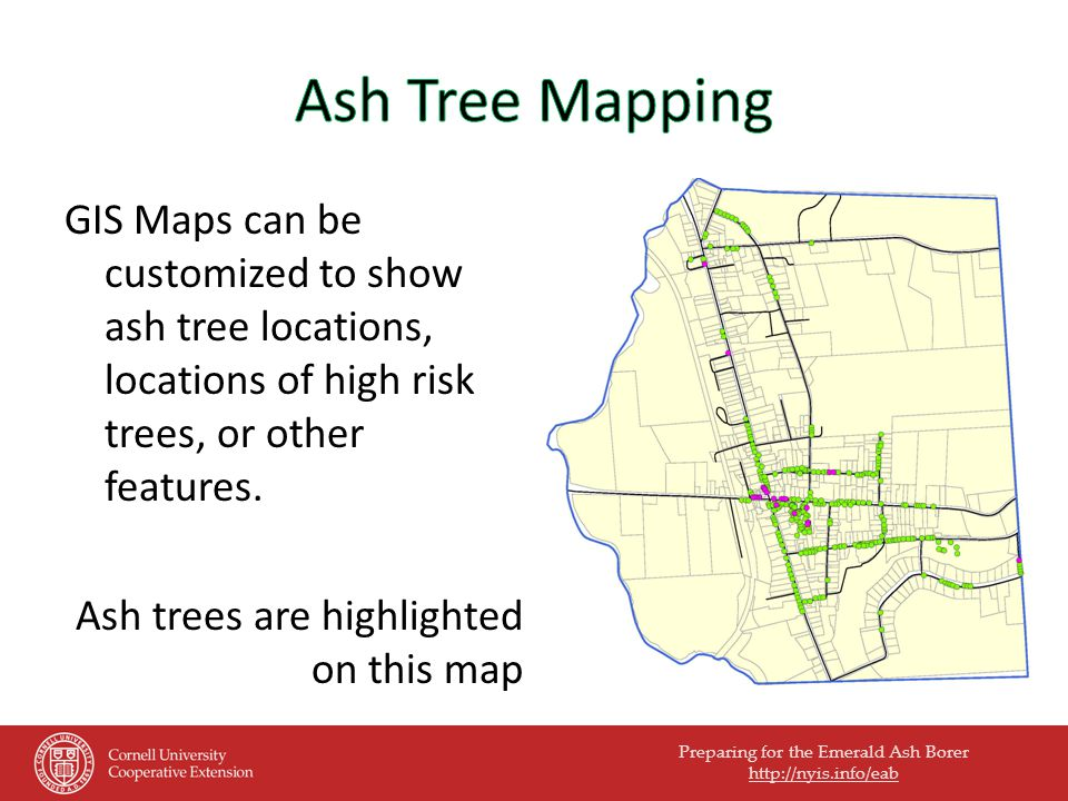 Preparing for the Emerald Ash Borer   GIS Maps can be customized to show ash tree locations, locations of high risk trees, or other features.
