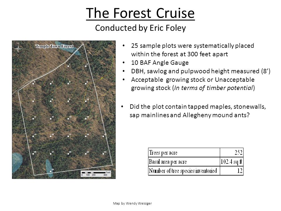 The Forest Cruise Conducted by Eric Foley 25 sample plots were systematically placed within the forest at 300 feet apart 10 BAF Angle Gauge DBH, sawlog and pulpwood height measured (8') Acceptable growing stock or Unacceptable growing stock (In terms of timber potential) Map by Wendy Weisiger Did the plot contain tapped maples, stonewalls, sap mainlines and Allegheny mound ants