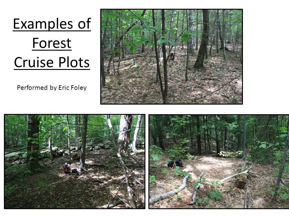 Examples of Forest Cruise Plots Performed by Eric Foley
