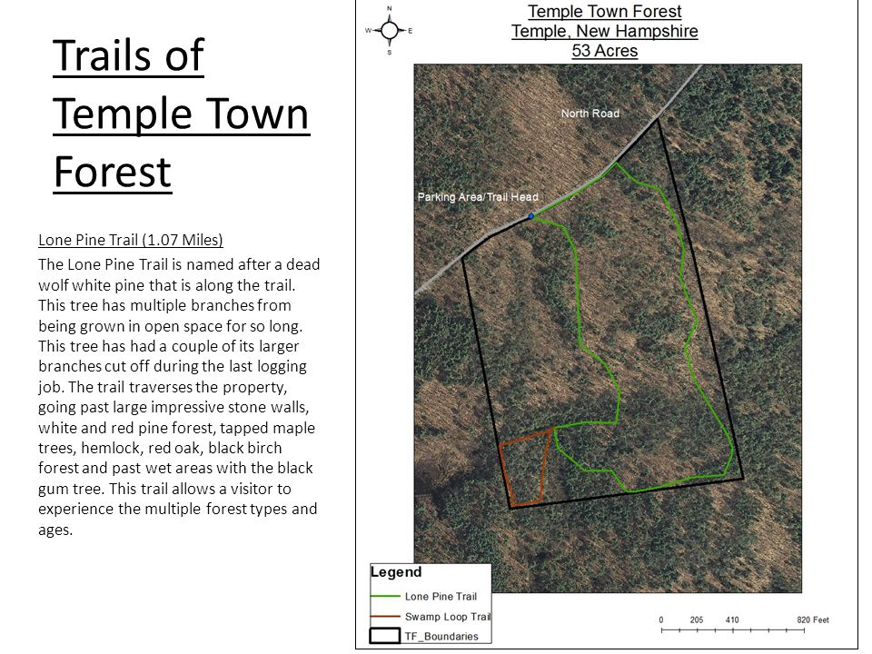 Map by Eric Foley Trail Maps Trails of Temple Town Forest Lone Pine Trail (1.07 Miles) The Lone Pine Trail is named after a dead wolf white pine that
