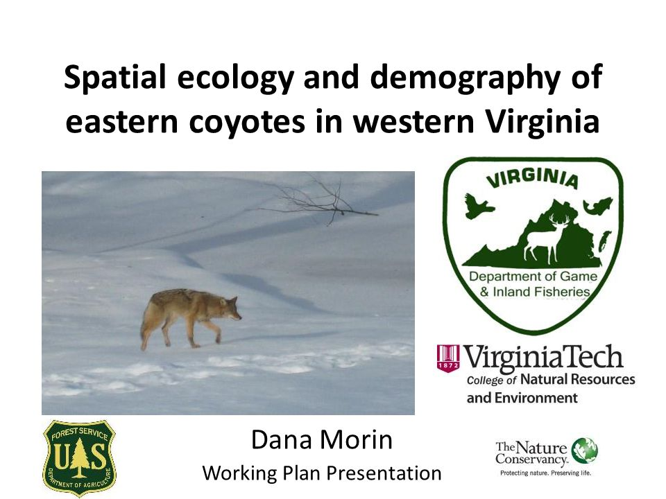 Spatial ecology and demography of eastern coyotes in western Virginia Dana Morin Working Plan Presentation