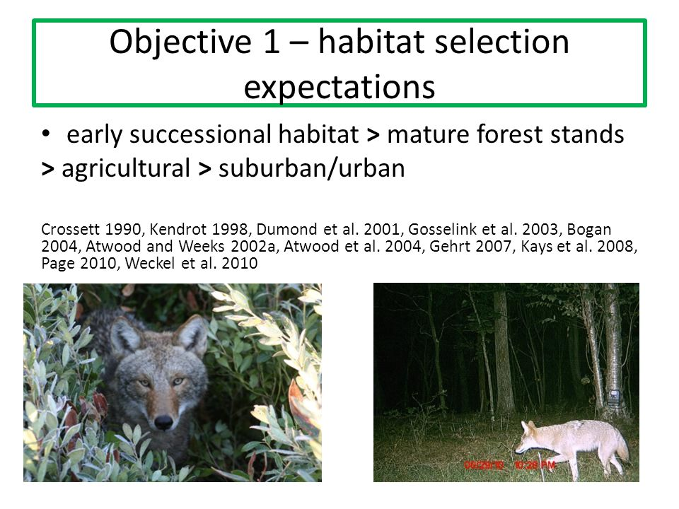 Objective 1 – habitat selection expectations early successional habitat > mature forest stands > agricultural > suburban/urban Crossett 1990, Kendrot