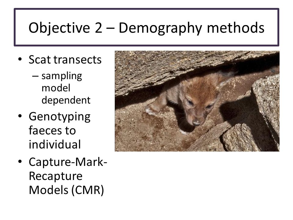 Objective 2 – Demography methods Scat transects – sampling model dependent Genotyping faeces to individual Capture-Mark- Recapture Models (CMR)