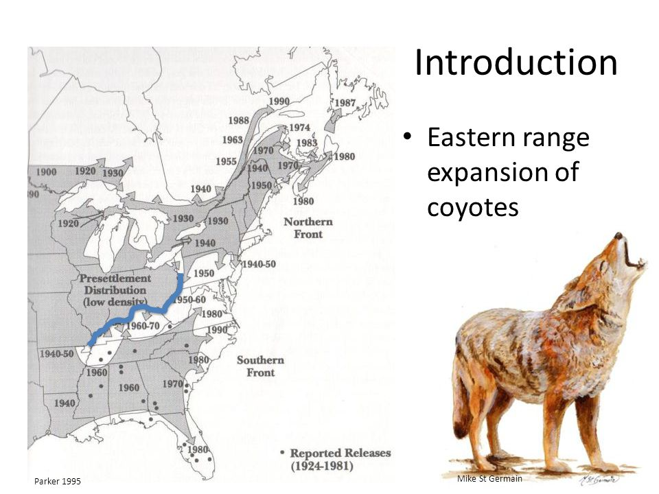 Introduction Eastern range expansion of coyotes Parker 1995 Mike St Germain
