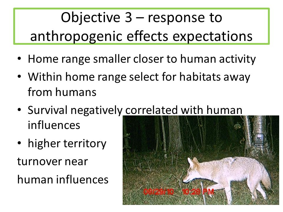 Objective 3 – response to anthropogenic effects expectations Home range smaller closer to human activity Within home range select for habitats away fr