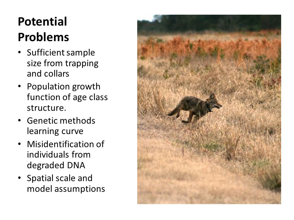 Potential Problems Sufficient sample size from trapping and collars Population growth function of age class structure. Genetic methods learning curve