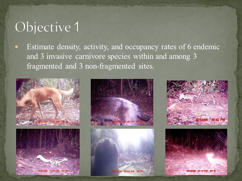 Estimate density, activity, and occupancy rates of 6 endemic and 3 invasive carnivore species within and among 3 fragmented and 3 non-fragmented sites.