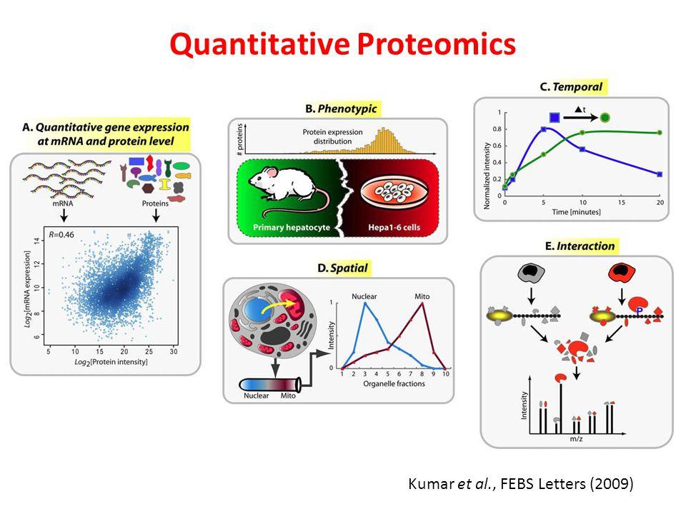 Kumar et al., FEBS Letters (2009) Quantitative Proteomics