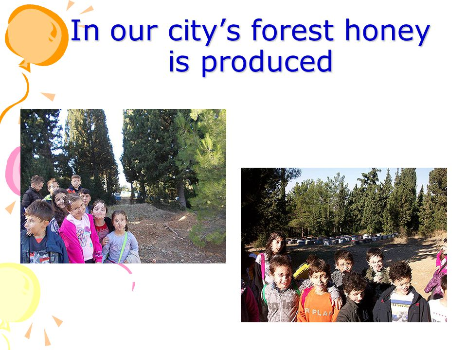 In our city's forest honey is produced